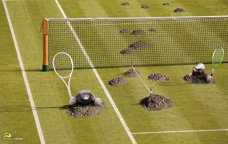 grass surface Wimbledon funny tennis pimpmytennis