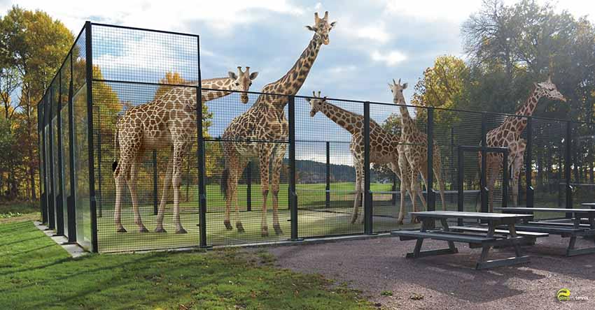 Padel, Padle, Paddle? Girafe ou Giraffe?