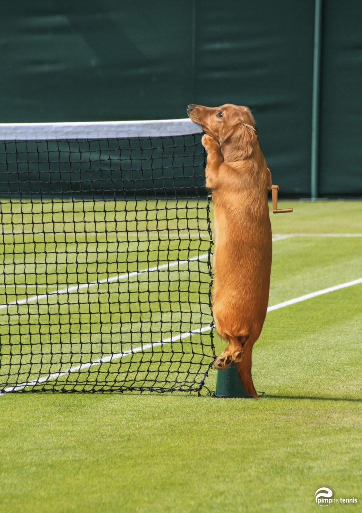 Daria Gavrilova's hund, Tofu, in Wimbledon